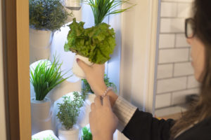 Creating A Healthy Kitchen Environment