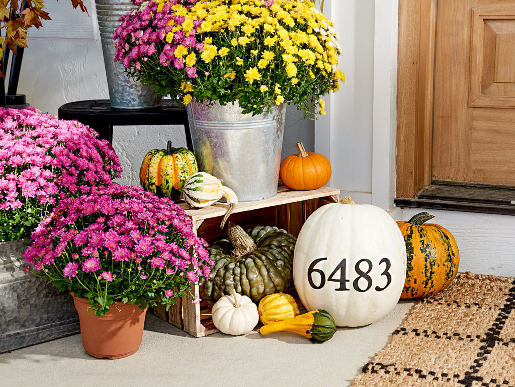 Can You Decorate Your Living Space With Pumpkins?