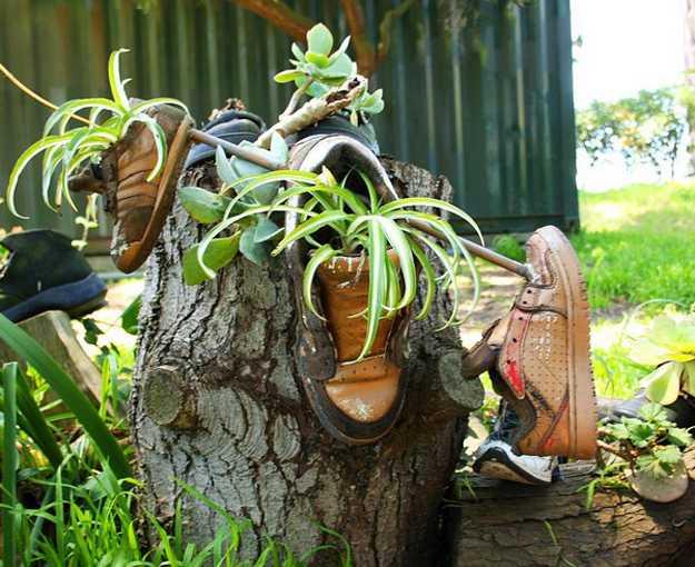 Herb garden using running shoes