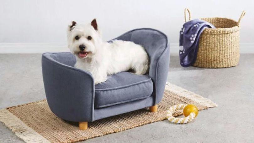aldis special dog sofas