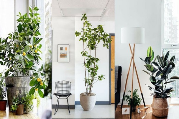 Decorate with large plants