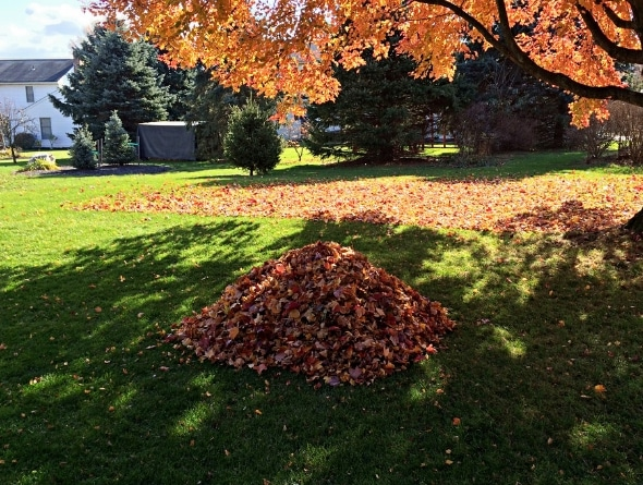 Don't leave leaves lying around