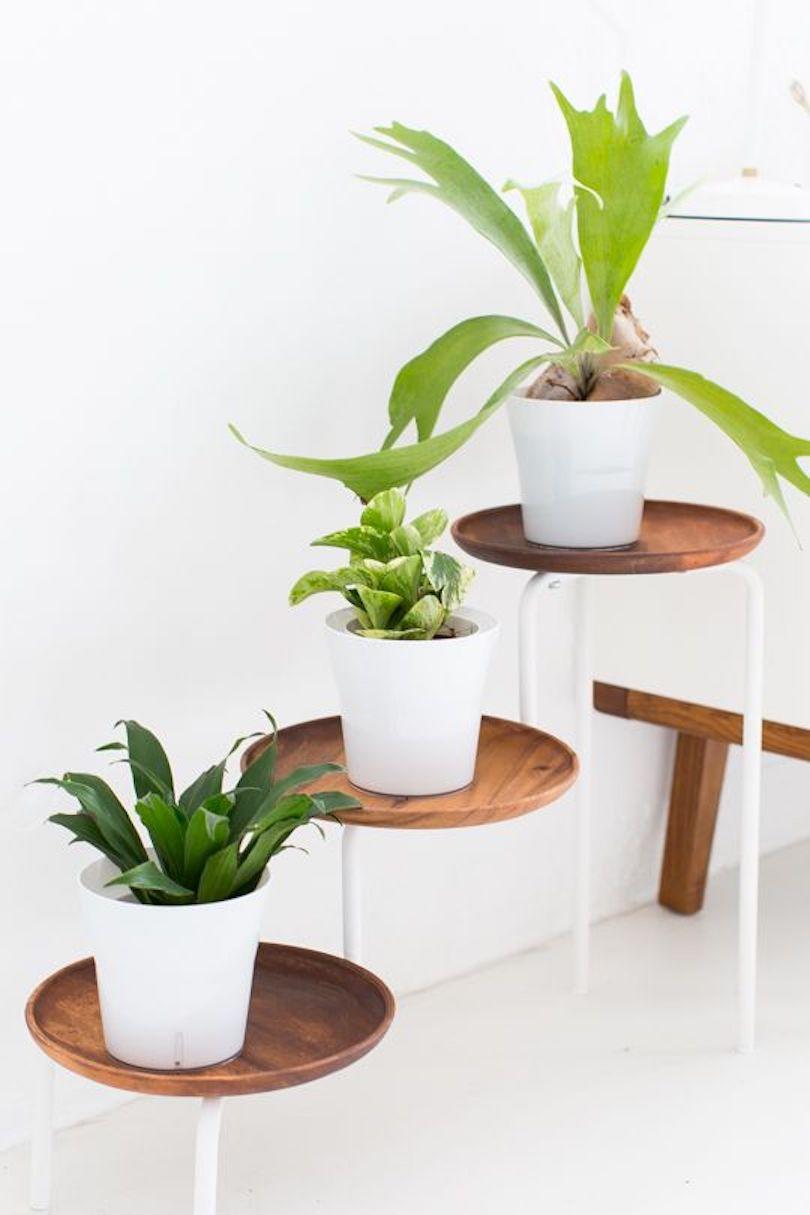 DIY Acacia Wood Plant Stand