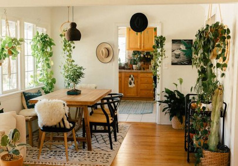 Floating Living Room Plants