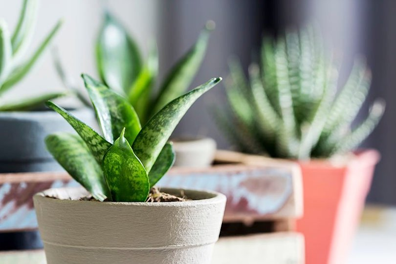 best living room plants to dress up your space