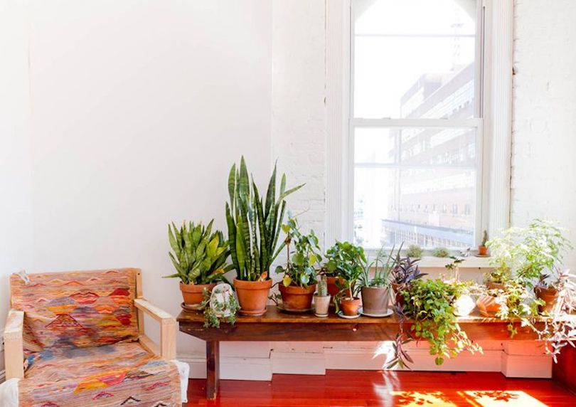living room plants to dress up your space